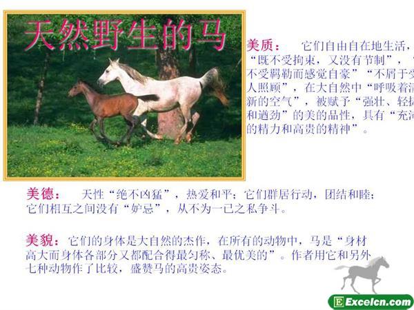 人教版七年级语文下册第29课《马》ppt课件3