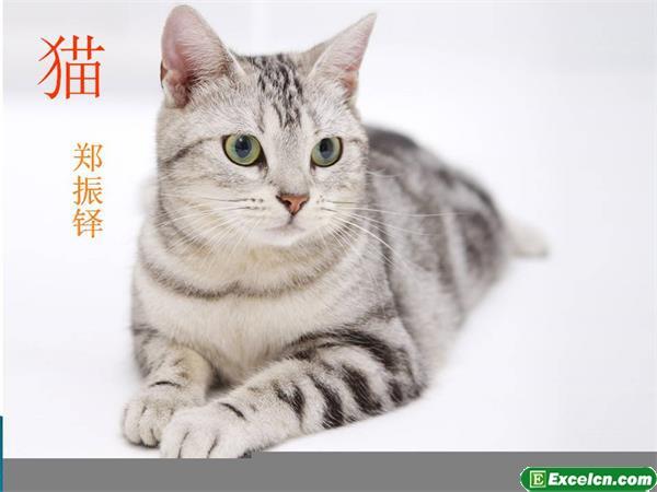 人教版七年级语文下册第26课《猫》课件